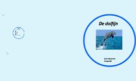De dolfijn