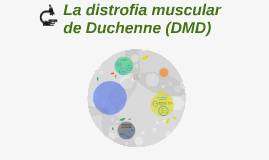 La distrofia muscular de Duchenne (DMD)