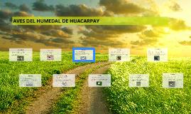 AVES DEL HUMEDAL DE HUACARPAY