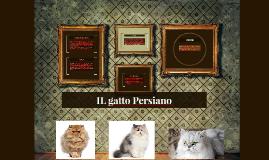 IL gatto Persiano