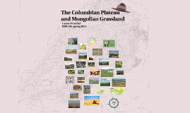 The Columbian Plateau and Mongolian Grassland