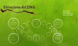 Estrazione del DNA da una banana