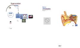 Vestibular Apparatus and Proprioception