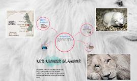 Copy of LOS LEONES BLANCOS