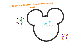 The Brain: The Most Functional Place on Earth