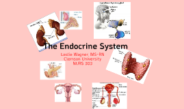 Endocrine Lecture