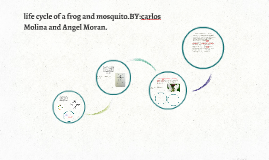 komodo dragon and tiger life cycle by Dana Bluncson on Prezi