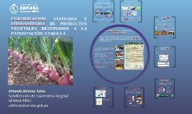 Certificación sanitaria y fitosanitaria de cebolla