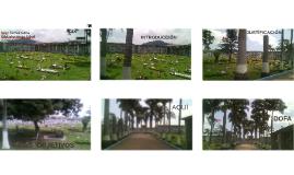 Cultura Cimiterium