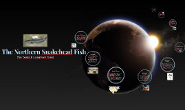 The Northern Snakehead Fish