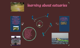 learning about estuaries