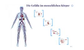 Das menschliche Gefäßsystem