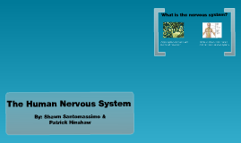 Copy of The Basics Of The Human Nervous System