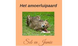 Het amoerluipaard