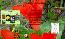 Les plantes bulbeuses