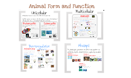 Copy of Ch.40 Intro to Animal Form and Function