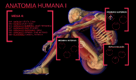 Copy of ANATOMIA HUMANA I