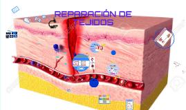 Copy of REPARACIÓN DE TEJIDOS