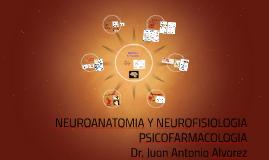 NEUROANATOMIA Y NEUROFISIOLOGIA
