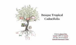 Bosque Tropical Caducifolio