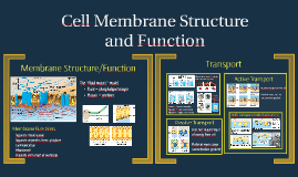 Cell Membrane Strucutre and Function