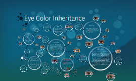 Copy of 2015-2016 Eye Color Inheritance