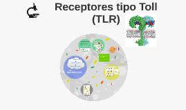 Receptores tipo Toll (TLR)