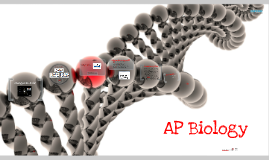 Copy of AP Biology: Erwin Chargaff