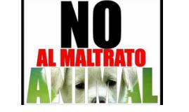Copy of ¿Qué es el maltrato animal?