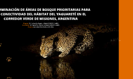 Copy of Determinación de áreas de bosque prioritarias para la conectividad del hábitat del Yaguareté en el Corredor Verde de Misiones, Argentina