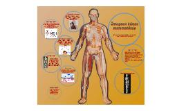 Žmogaus kūnas matematikoje