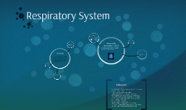 Where Is The Respiratory System Located by Paris Gadley on Prezi