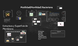 Copy of Motilidad Bacteriana