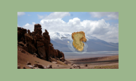 Cold Desert: The Atacama Desert