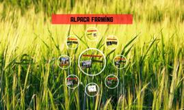 Alpaca farming