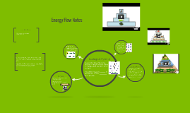 Copy of Energy Flow Notes