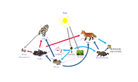 IB Biology Food Web