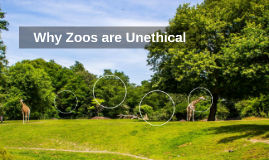 Why Zoos are Unethical