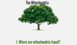 Copy of The Mitochondria