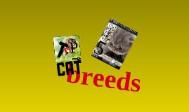 TOP 5 cat breeds