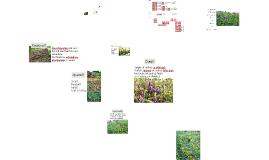 Copy of Rotation et compagnonnage des plantes