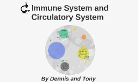 Immune System and Circulatory System