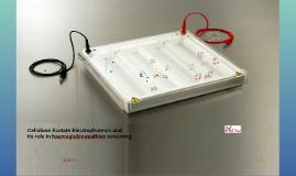 Cellulose Acetate Electrophoresis