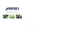 Por que a BRID Soluções existe?