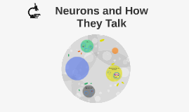 Neurons and How They Talk