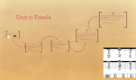 Science Unit 5-Fossils
