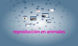 reproduccion en animales