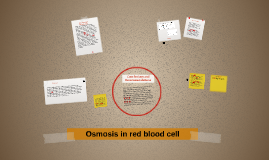 Copy of Osmosis in red blood cell