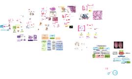 Copy of Histología aparato reproductor masculino