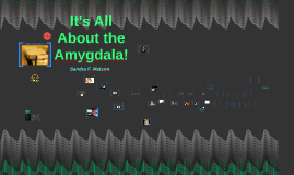 It's All About the Amygdala!